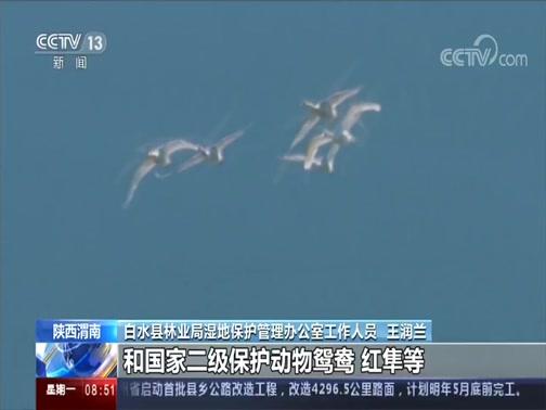 [朝闻天下]陕西渭南 湿地成候鸟栖息乐园