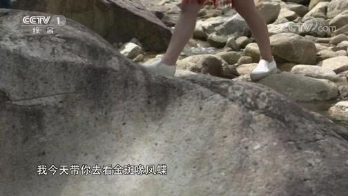 [中华民族]苍茫云水间寻找珍稀的金斑喙凤蝶