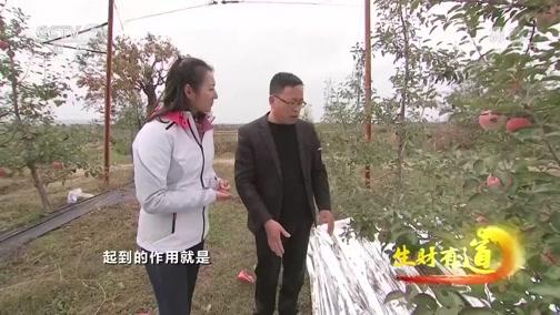 《生财有道》 20200107 陕西白水:苹果飘香 致富一方