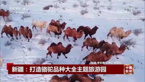[中国新闻]新疆:打造骆驼品种大全主题旅游园