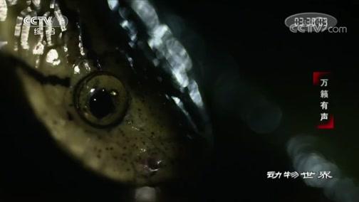 [动物世界]捕食也能慢吞吞?只要你的猎物也是慢性子 没有什么不可以