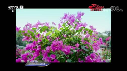 [中国音乐电视]歌曲《好开心》 演唱:李蓉