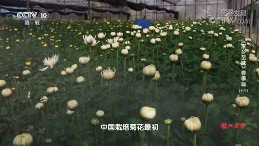 [探索·发现]食用菊花培育基地