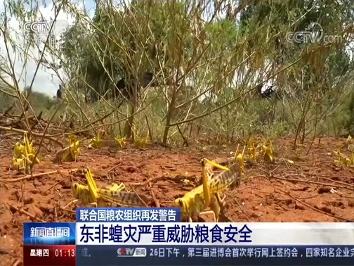 [新闻直播间]联合国粮农组织再发警告 东非蝗灾严重威胁粮食安全