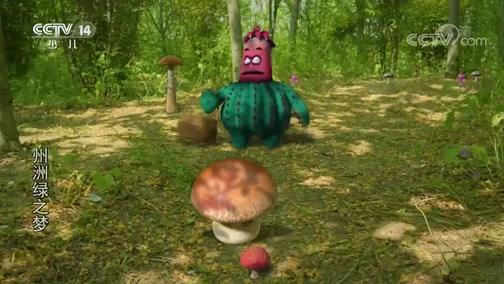 《州洲绿之梦》 第15集 采蘑菇
