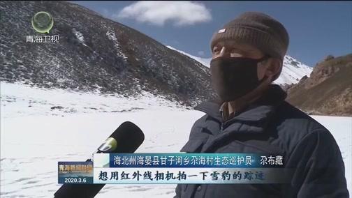 [青海新闻联播]海北州海晏县首次拍摄到雪豹活动影像
