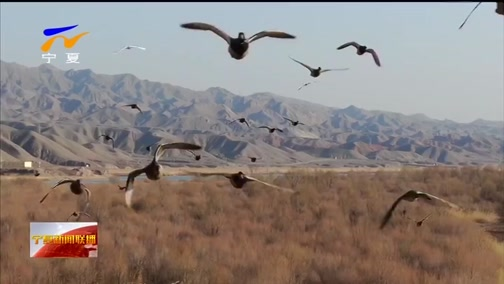 [宁夏新闻联播]百万只候鸟如约迁徙宁夏