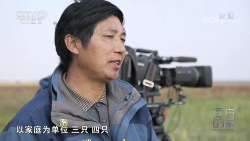 《远方的家》 20200319 世界遗产在中国 黄海之滨 动物家园