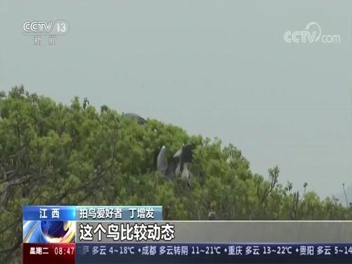 [朝闻天下]江西 鄱阳湖首批夏候鸟幼鸟进入学飞阶段