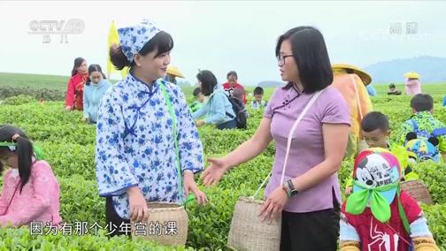 [大手牵小手]职业体验:采茶工