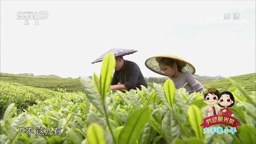 [大手牵小手]学——采茶