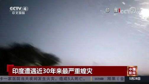 [中国新闻]印度遭遇近30年来最严重蝗灾
