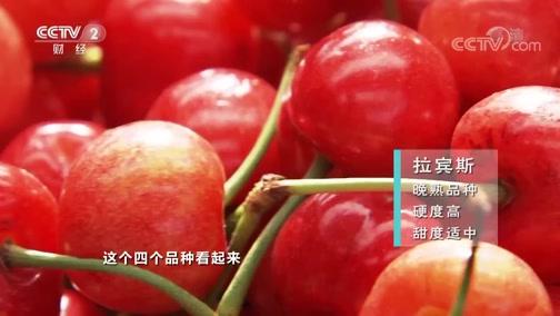 [生财有道]大樱桃品种众多 都有什么不同?