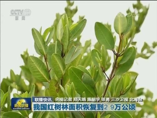 我国红树林面积恢复到2.9万公顷