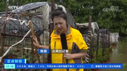 [正点财经]云南昆明:持续降雨致花卉大棚全部泡水