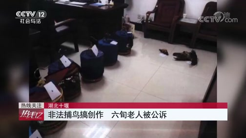 [热线12]湖北十堰 非法捕鸟搞创作 六旬老人被公诉