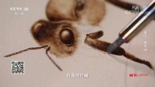 [探索·发现]谢志安创作黑小蜜蜂的科普作品