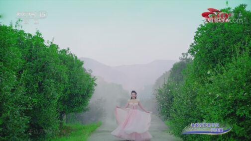 [中国音乐电视]歌曲《油茶花开茶子红》 演唱:王庆爽