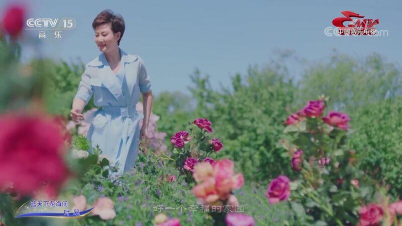 [中国音乐电视]歌曲《蓝天下花海间》 演唱:叶翠