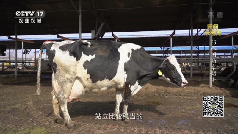 《田间示范秀》 20210427 巧破困局养奶牛
