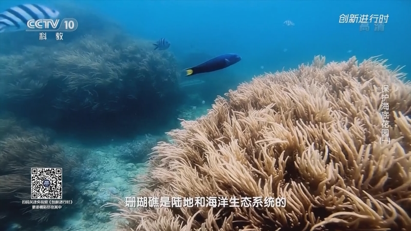 《创新进行时》 20210524 保护海底花园(一)