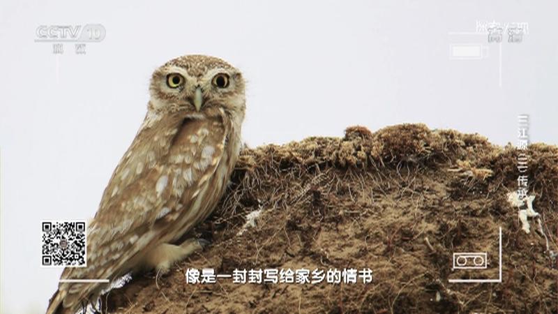 《探索·发现》 20210626 三江源(三)传承