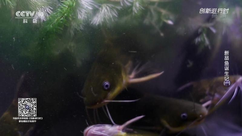 《创新进行时》 20210716 新品鱼诞生记(一)