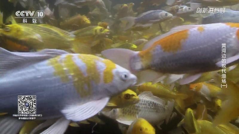 《创新进行时》 20210722 黄河边的现代渔场(一)