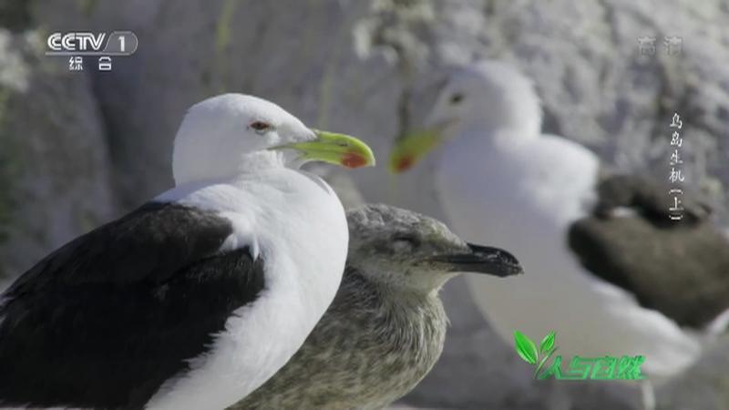 《人与自然》 20210729 鸟岛生机(上)