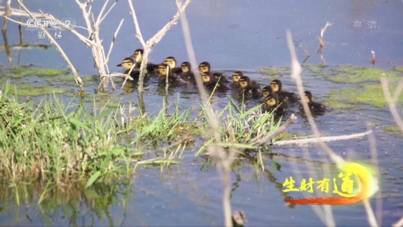 《生财有道》 20210817 新疆博湖:道道美味处处景 暑期旅游更给力