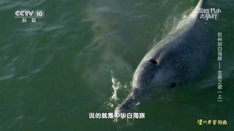 《跟着书本去旅行》 20210823 钦州的白海豚——生命之歌(上)