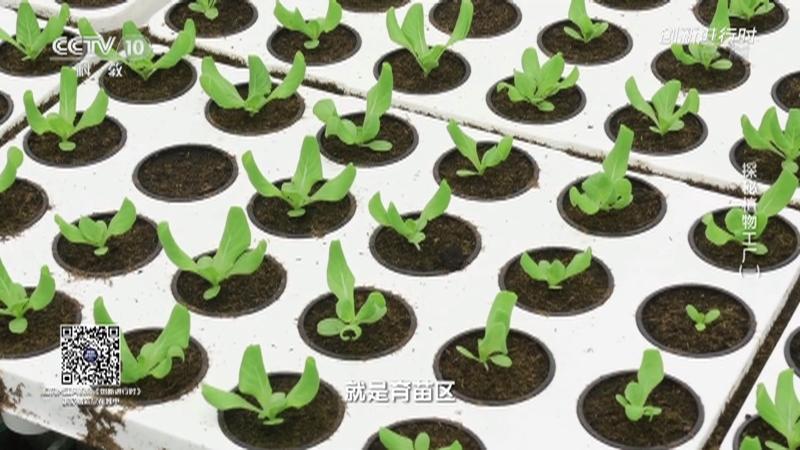 《创新进行时》 20210908 探秘植物工厂(一)