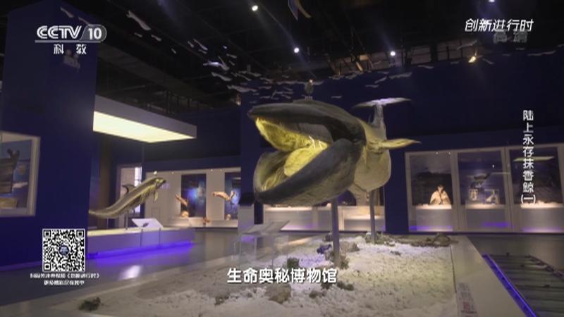 《创新进行时》 20210916 陆上永存抹香鲸(一)