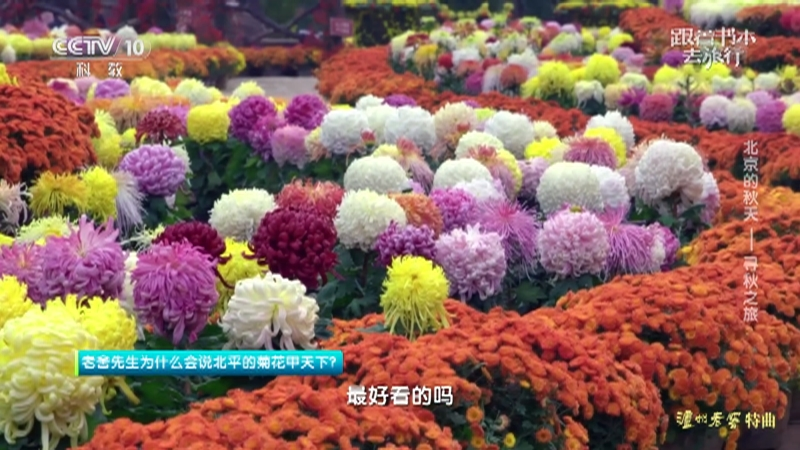《跟着书本去旅行》 20210920 北京的秋天——寻秋之旅