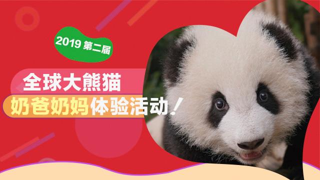 第二届全球大熊猫奶爸奶妈体验活动