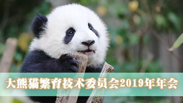 大熊猫繁育技术委员会2019年年会