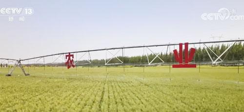 新粮即将上市 各地优化为农服务