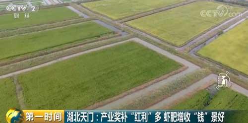 """湖北天门:产业奖补""""红利""""多 虾肥增收""""钱""""景好"""