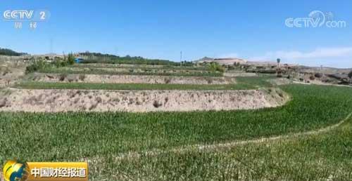 荒坡地变宽幅梯田 农业高质量发展助力农民脱贫致富