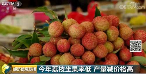 今年荔枝坐果率低 产量减价格高