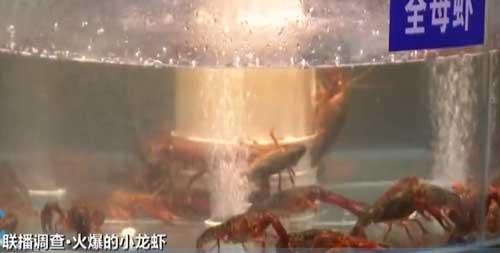 又到一年吃虾季 小龙虾行情火爆