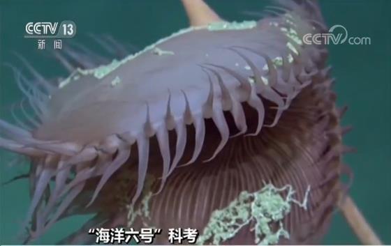 大型活动性冷泉被发现 周围还有很多神奇生物