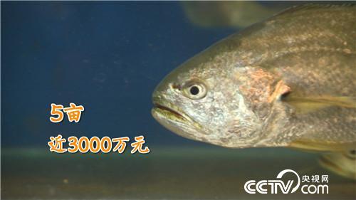 [致富经]他投入八年 就为让鱼多活一天 20190529