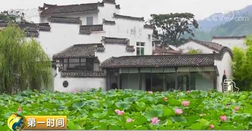 安徽黄山:千年古村夏荷初放