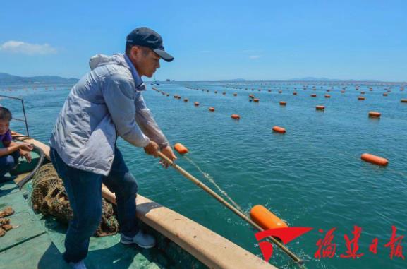 在黄岐湾外海带养殖示范区,海面上漂浮的橙色塑胶浮球都是采用环保材料。 邹家骅 摄
