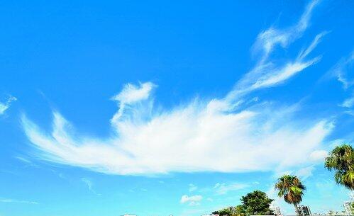 """上周末天空出现""""厦门蓝"""",毛卷云等将天空点缀得十分生动。"""