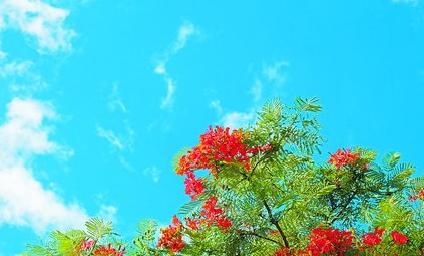 5日,筼筜湖畔蓝天红花,美不胜收。(记者 何炳进 摄)
