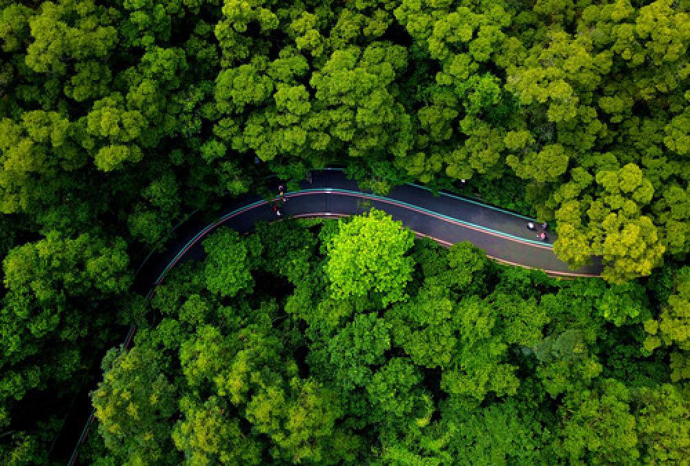 这是福州大腹山山地步道一角(5月12日无人机拍摄)。(新华社记者魏培全 摄)