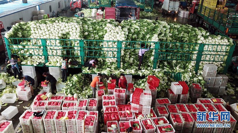 8月13日,在寿光农产品物流园,工作人员在整理蔬菜(无人机拍摄)。新华社记者 郭绪雷 摄