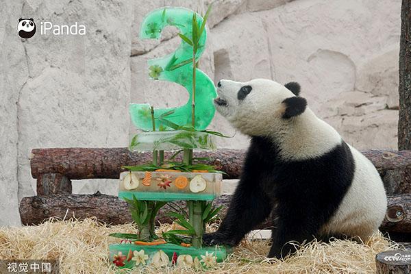 """今年""""丁丁""""和""""如意""""在莫斯科动物园过了生日"""
